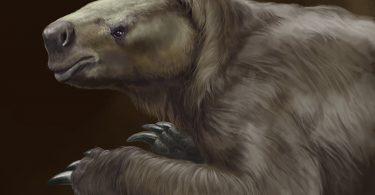 Ricostruzione del bradipo gigante Glossotherium robustum